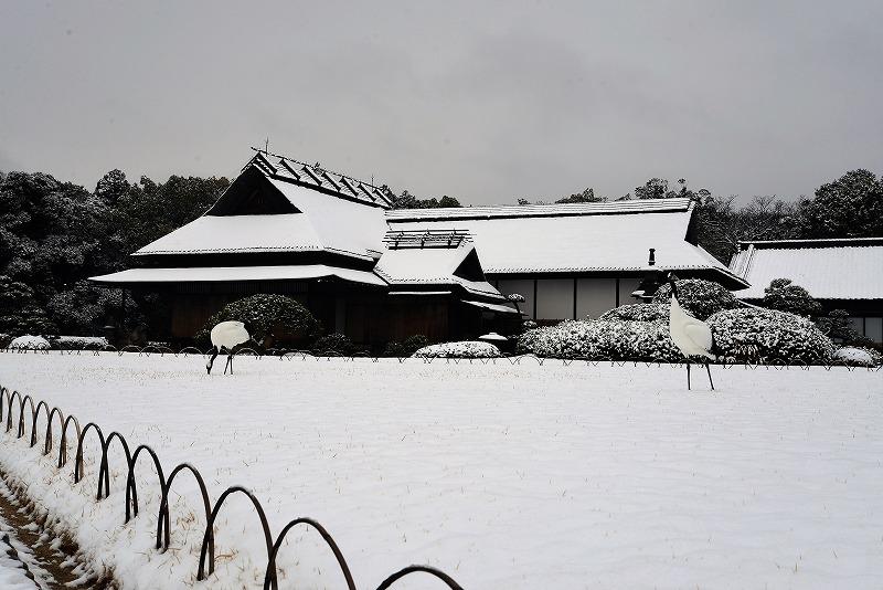 雪と丹頂1