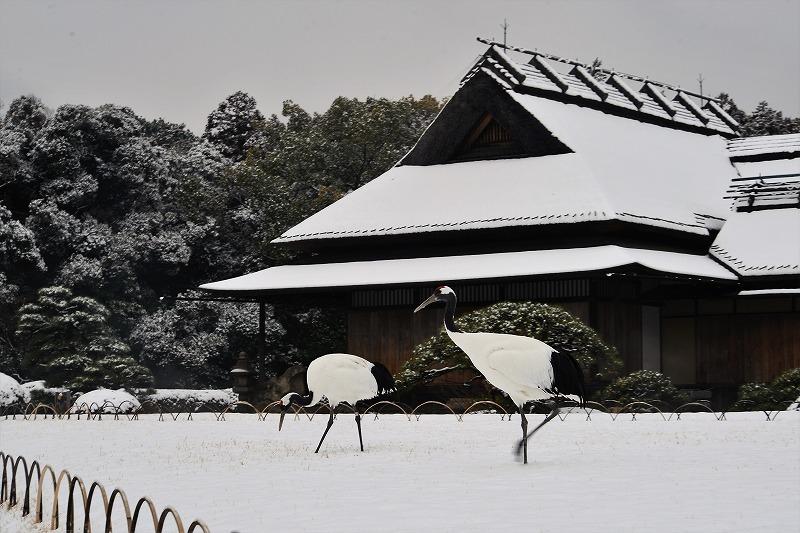 雪と丹頂2