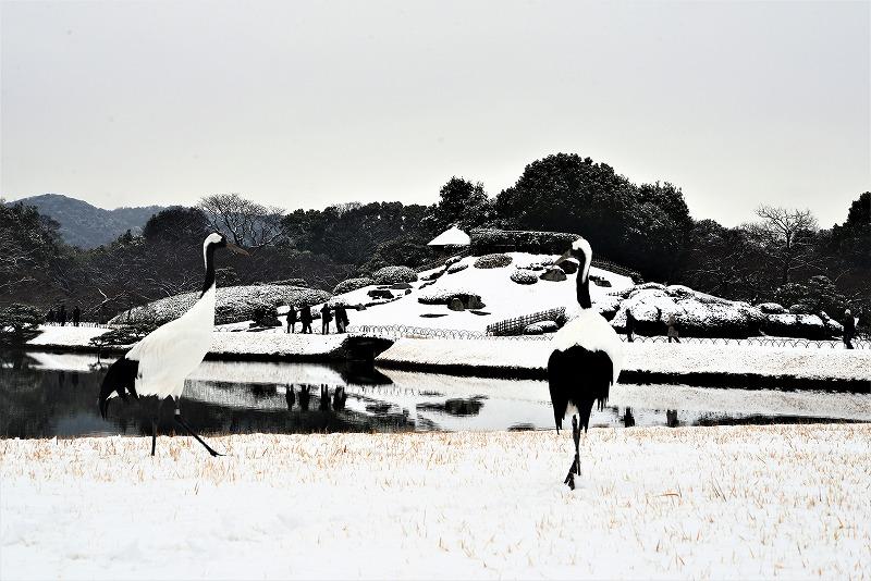 雪と丹頂8