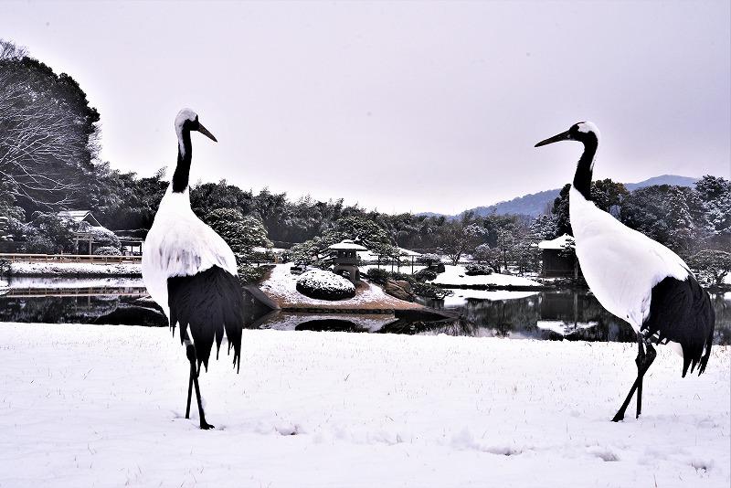 雪と丹頂11