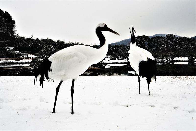 雪と丹頂12