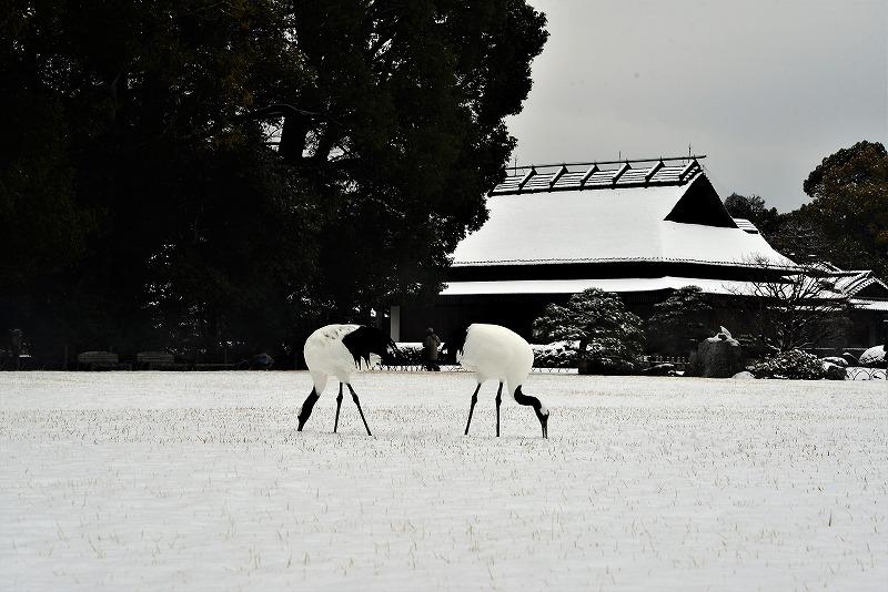 雪と丹頂13