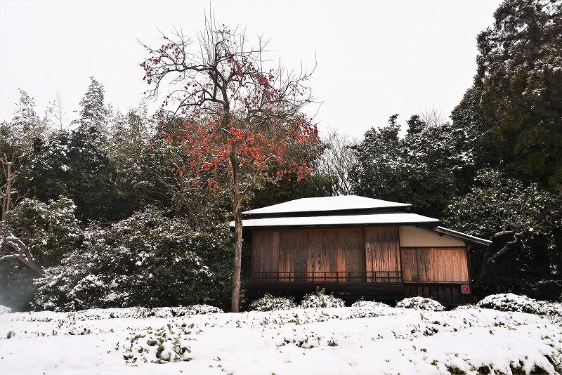 雪と丹頂20