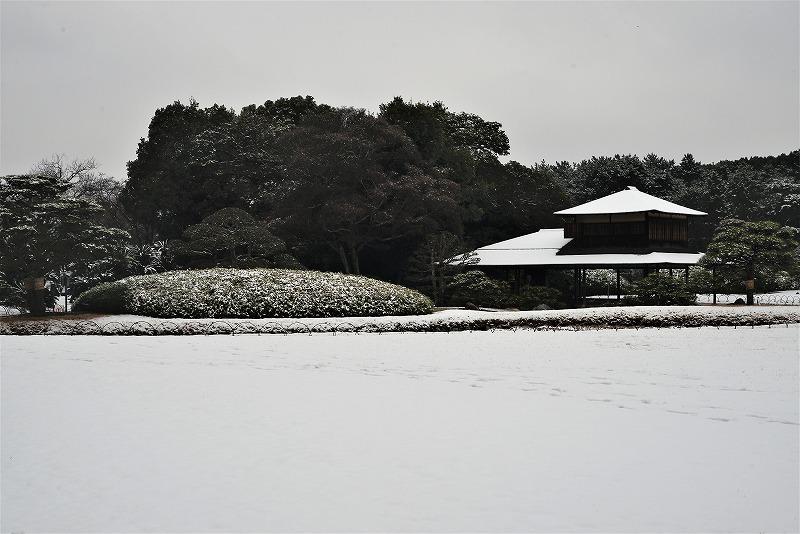 雪と丹頂21