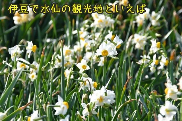 d-D75_3161.jpg