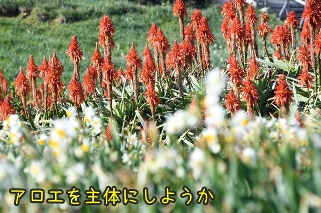 d-D75_3211.jpg