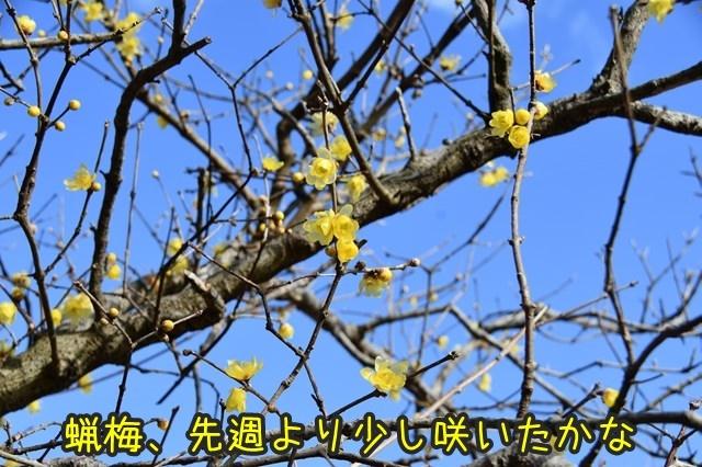 d-D75_3514.jpg