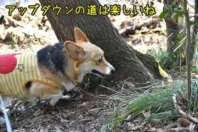 d-D75_4096.jpg