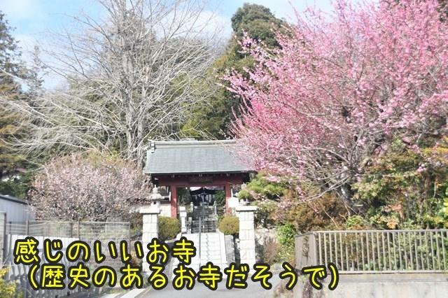 d-D75_4449.jpg