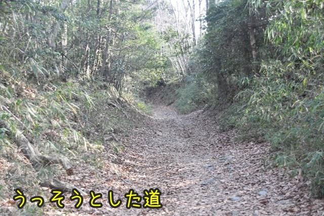 d-D75_4558.jpg
