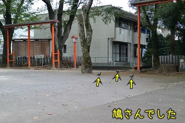 d-DSC_3766.jpg