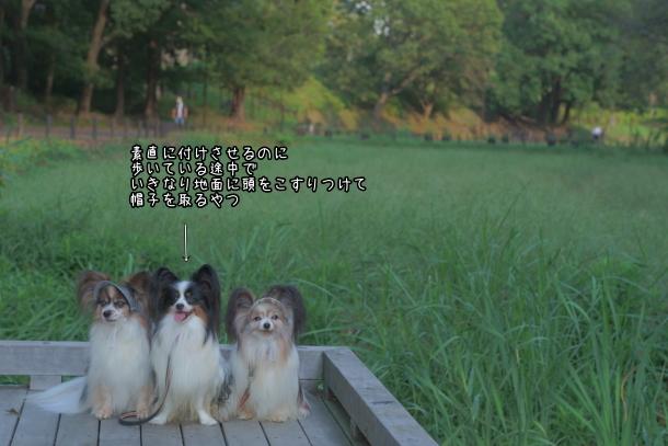 秋の里山ガーデン00080132