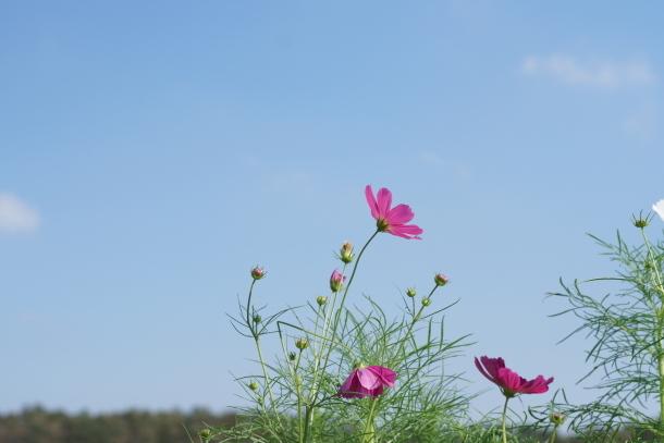 秋の里山ガーデン00080107
