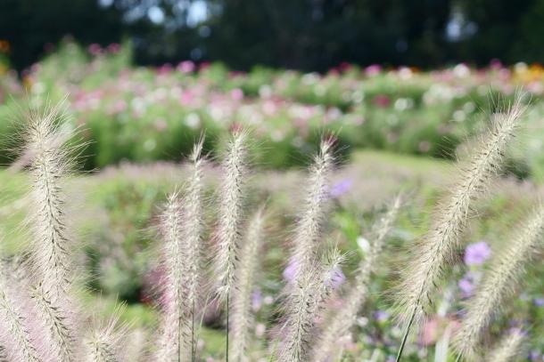 秋の里山ガーデン00080122