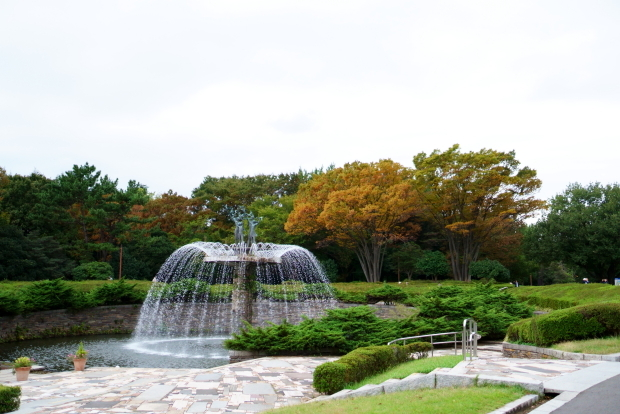 昭和記念公園コスモス201900080333