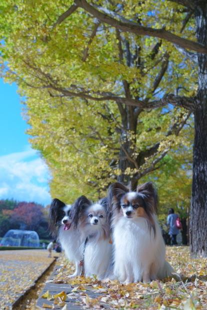 昭和記念公園00080927