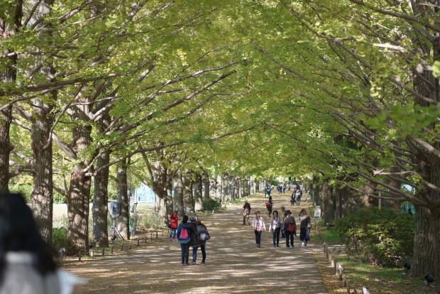 昭和記念公園00080948