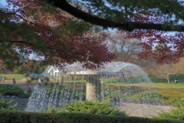 昭和記念公園00080991