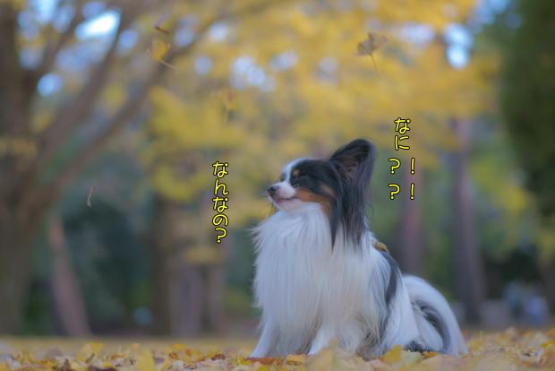 蓮ぴょんと昭和記念公園00081453