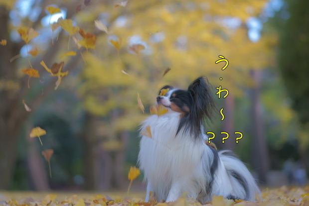 蓮ぴょんと昭和記念公園00081456
