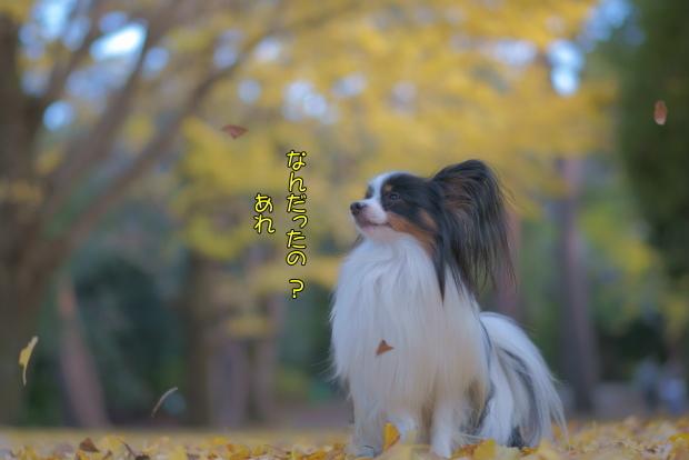 蓮ぴょんと昭和記念公園00081460