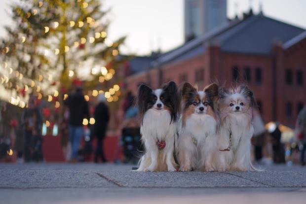 赤レンガ倉庫のクリスマス00082086