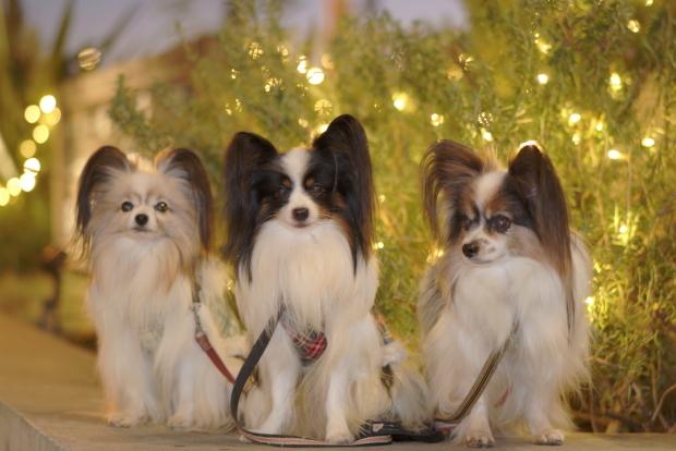 赤レンガ倉庫のクリスマス00082128