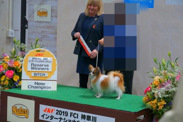リリーちゃん チャンピオン00071691