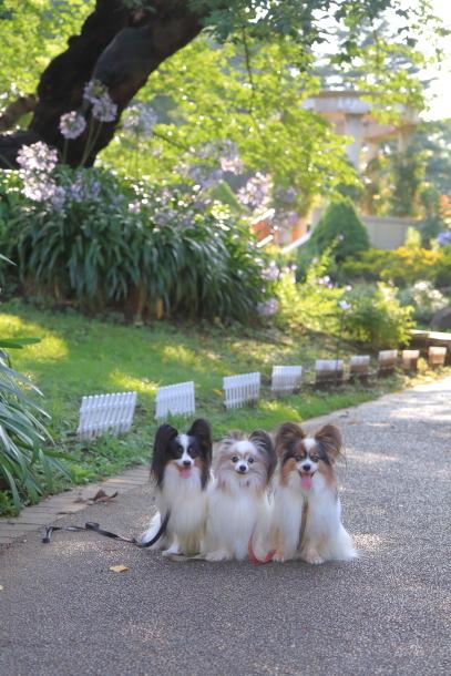 3匹で岡野見える丘公園00079004