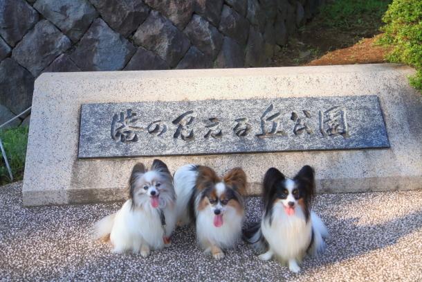 3匹で岡野見える丘公園00079023