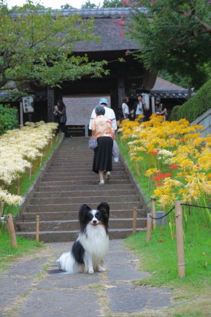 里山ガーデン 西方寺00080233