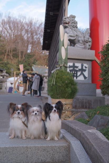 琴平神社2020初詣00082910