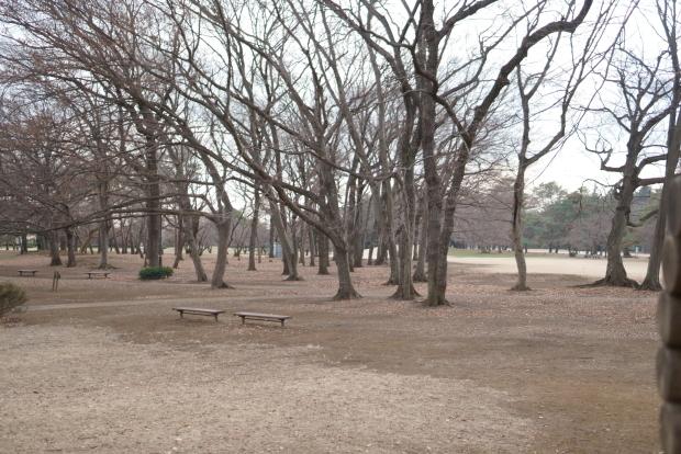 都立野川公園00082951