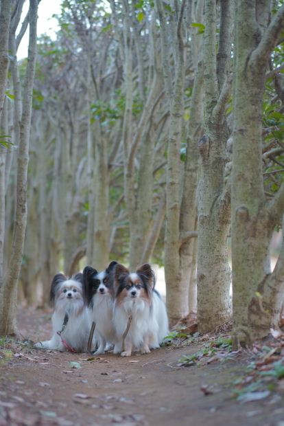 東高根森林公園00083827