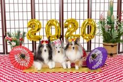 20200102a1.jpg