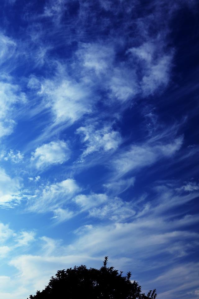 房状巻雲が出た日