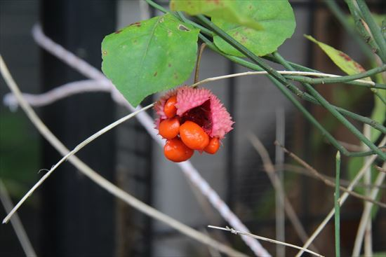 アメリカ吊り花
