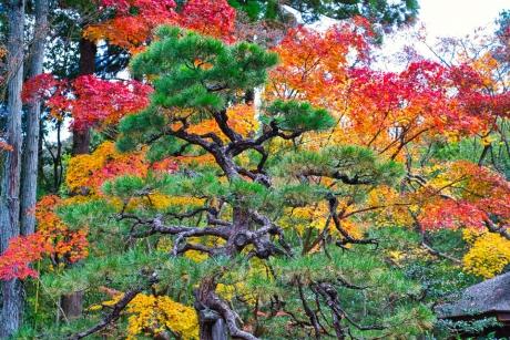 2019_kyoto_autumn_13.jpg