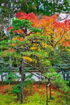 2019_kyoto_autumn_14.jpg