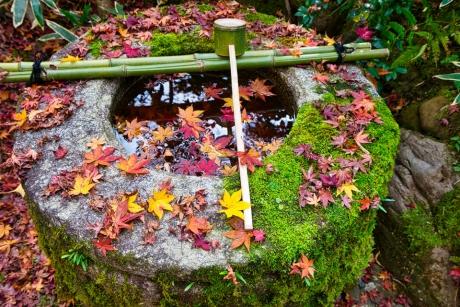 2019_kyoto_autumn_15.jpg