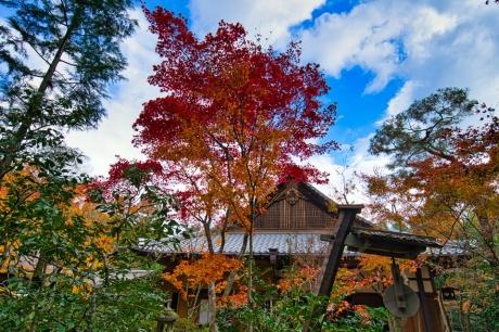 2019_kyoto_autumn_16.jpg