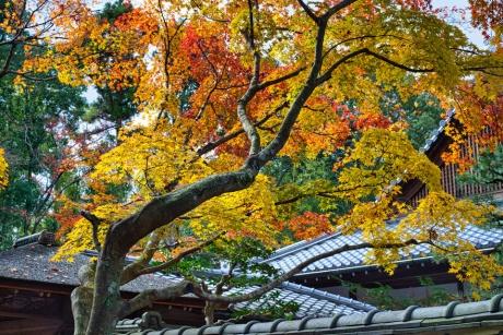 2019_kyoto_autumn_18.jpg