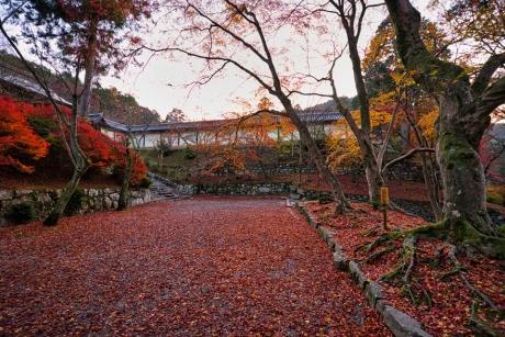 2019_kyoto_autumn_1.jpg