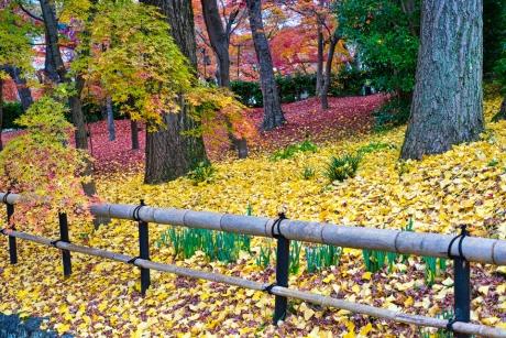2019_kyoto_autumn_27.jpg