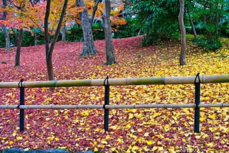 2019_kyoto_autumn_28.jpg
