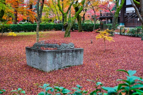 2019_kyoto_autumn_29.jpg