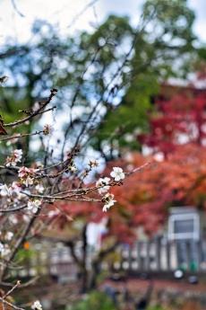 2019_kyoto_autumn_33.jpg