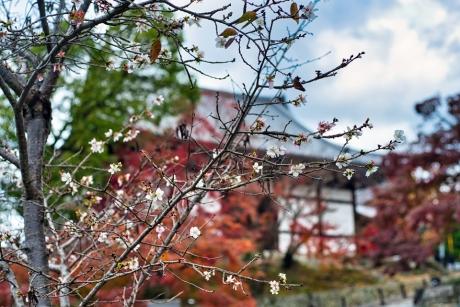 2019_kyoto_autumn_34.jpg