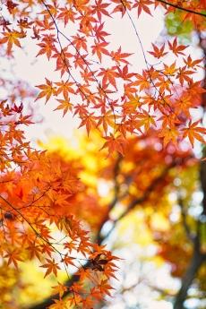 2019_kyoto_autumn_35.jpg