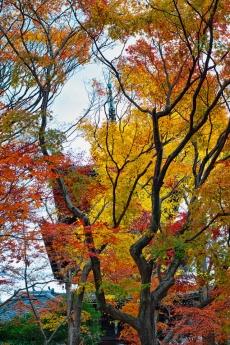2019_kyoto_autumn_36.jpg